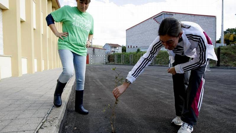 sapoconcho.La localidad de Cerdedelo (Laza) sufre las consecuencias del paso de los camiones.