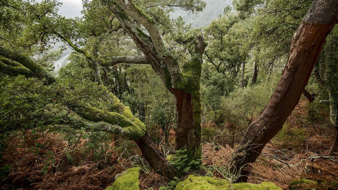 Bosques de la Ribeira Sacra y O Courel, patrimonio vivo.Gente aprovisionándose de agua en las fuentes de Santiago de Compostela