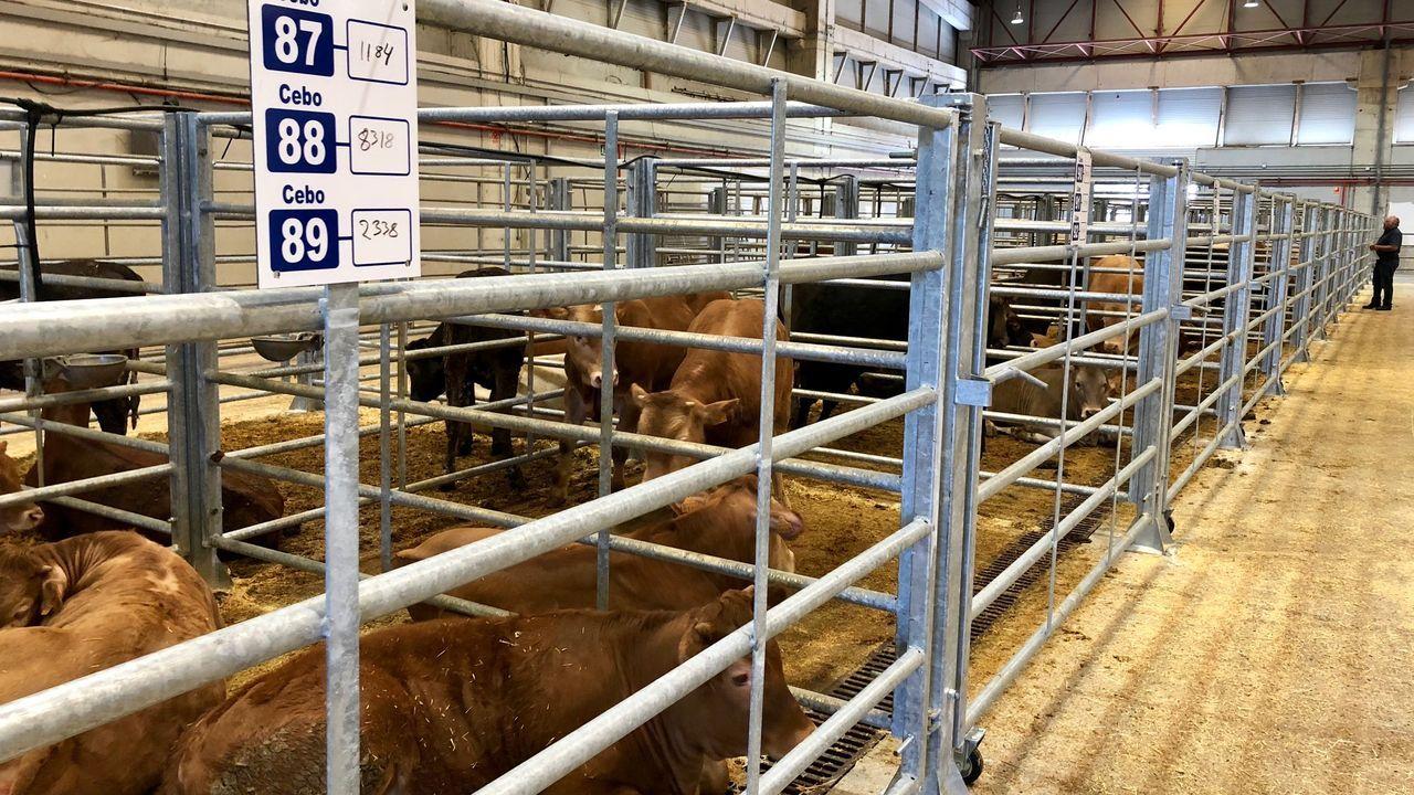Ternera Gallega ante la crisis del covid-19: propuestas para ayudar al vacuno de carne