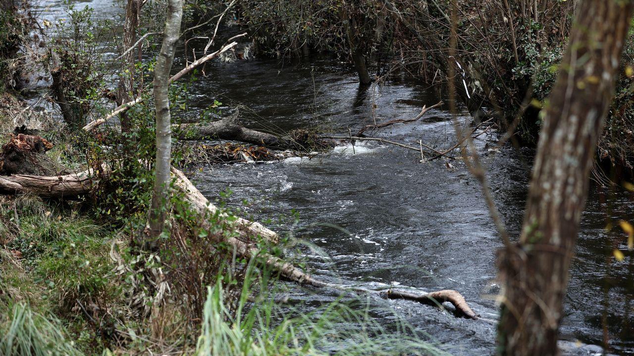 Alerta: árboles caídos y maleza están formando una presa natural en Landrove.Chuny Bermúdez de Castro, en una imagen de archivo