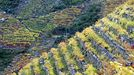 Paisaje otoñal de viñas en bancales junto al Sil en Doade (Sober).