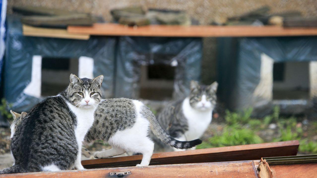 En Lugo hay una veintena de colonias felinas controladas