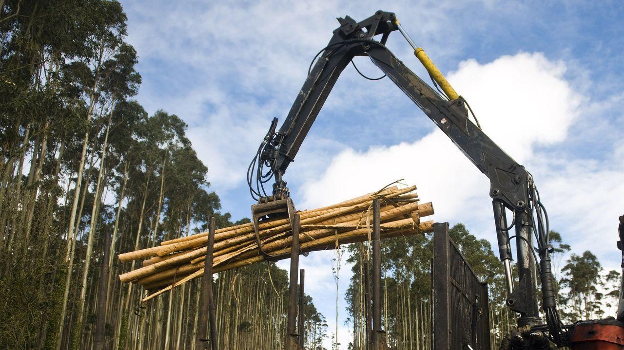 En Outeiro de Rei hay notable actividad forestal