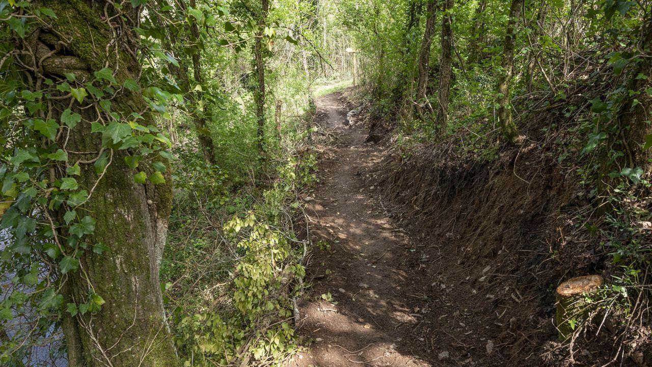 Un tramo del nuevo sendero abierto en la ruta del Cabe, en la parroquia de A Parte
