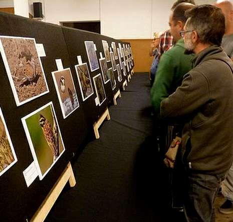 Estorninos dibujando <span lang= gl >cogomelos</span>.Los niños disfrutaron con la sesión de anillamiento de Pablo Pita, tras ver la exposición de fotografías.