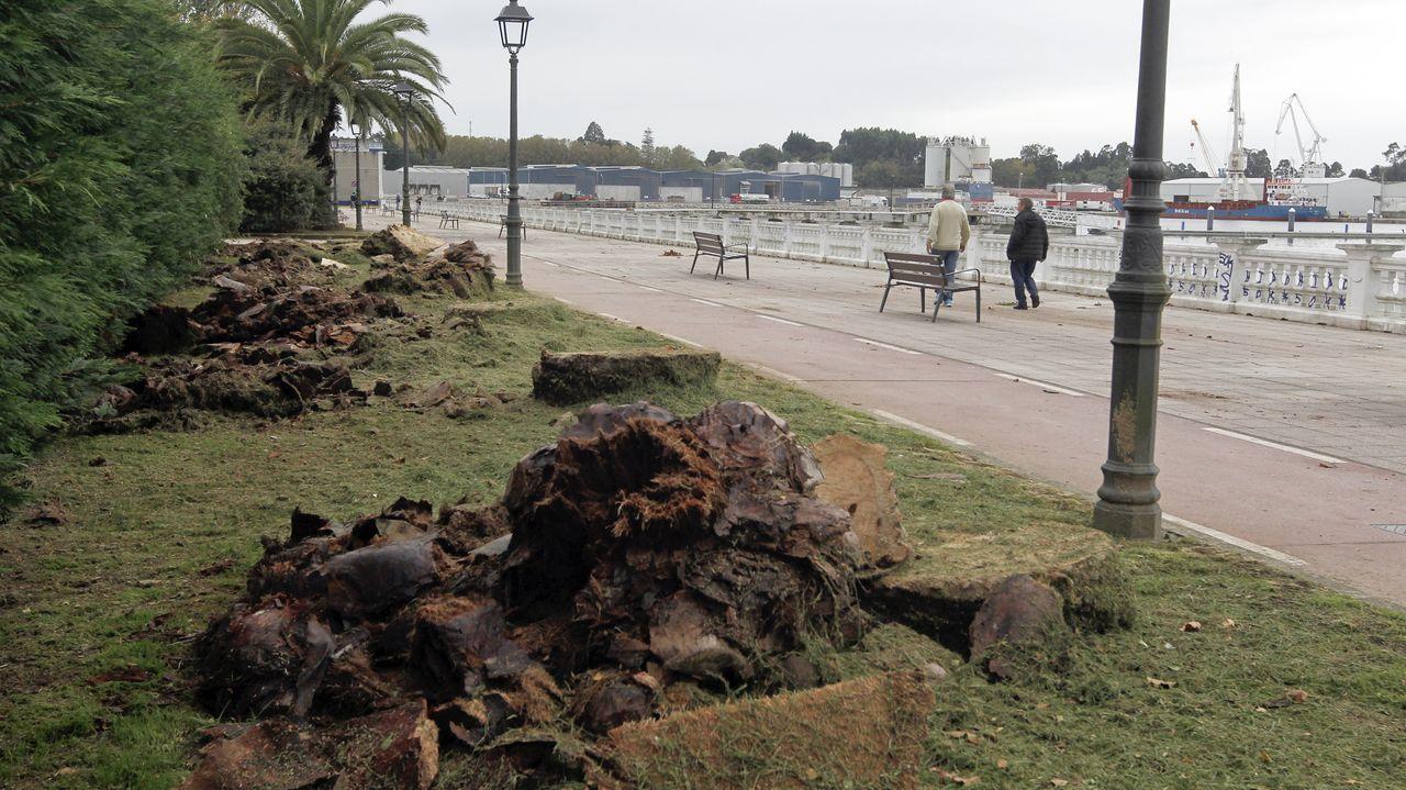 La tala final de las palmeras del parque del Centenario