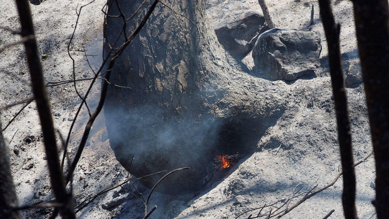 Un árbol arde en su interior tras el incendio forestal de Tarragona, que ha afectado a 6.000 hectáreas