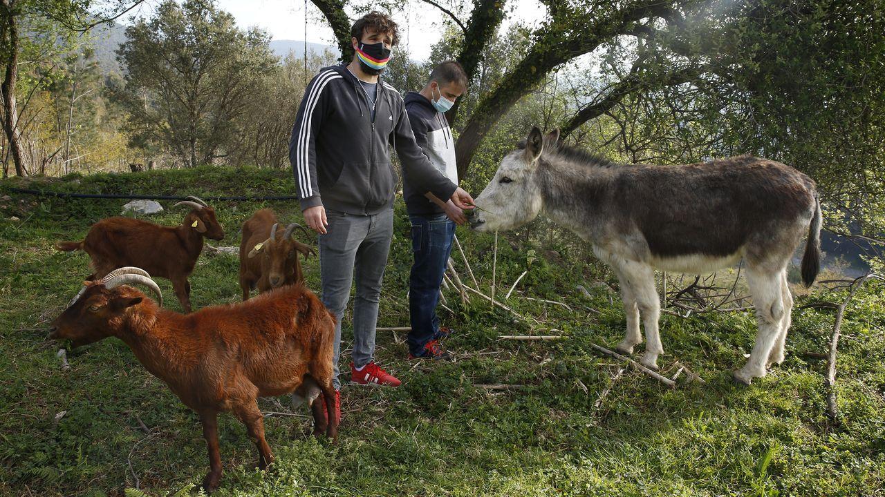 Luis Tembra y Martín Cespón con el burro Míchel y algunas de las cabras que están en la parcela