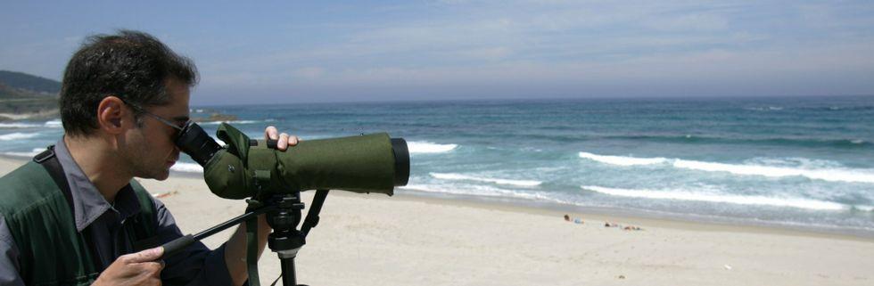 Las aves acuden a los arenales de Arteixo porque es una zona abierta al mar, pero también ofrece refugio y tiene riachuelos de agua dulce.