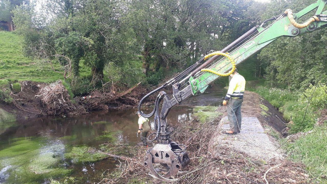 Los árboles retirados estaban secos o enfermos, lo que justificó esa operación