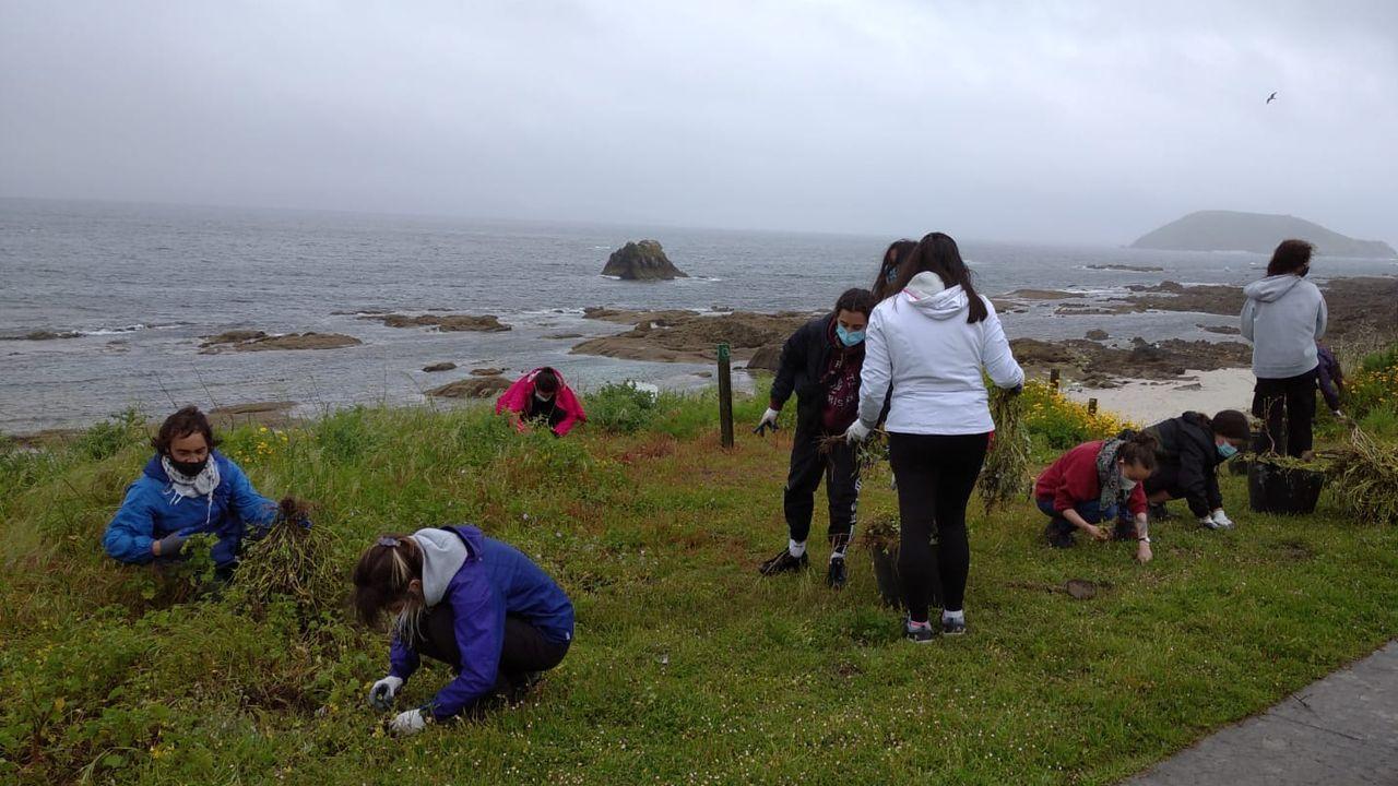 Programa de voluntariado ambiental en la isla de Ons