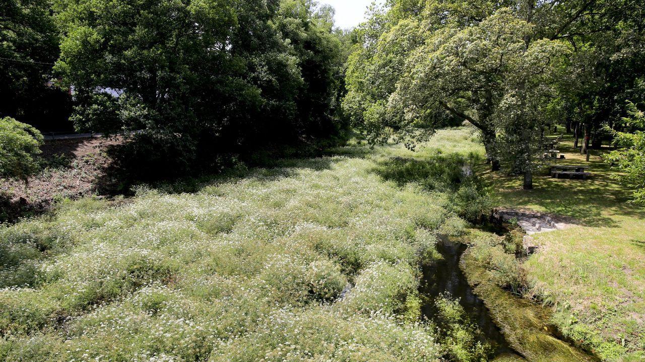 Lugares para visitar en Lugo en un día gris.Imagen del río, con caudal bajo cerca de la carballeira, el año pasado
