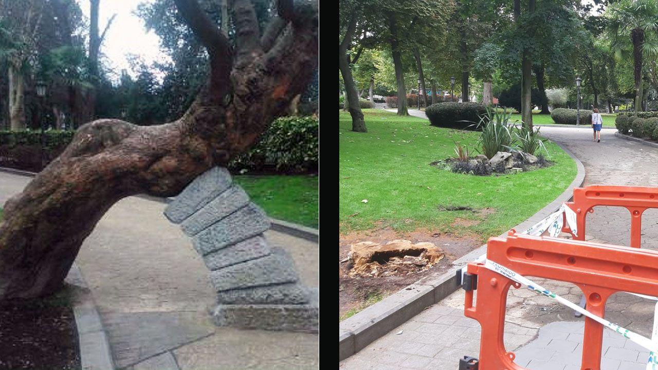 Antes y después, de la tala del Ayuntamiento de Oviedo