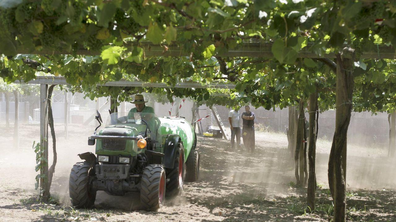 Imagen tomada en el mes de marzo cuando comenzaron a hacerse los primeros trabajos en la plantación