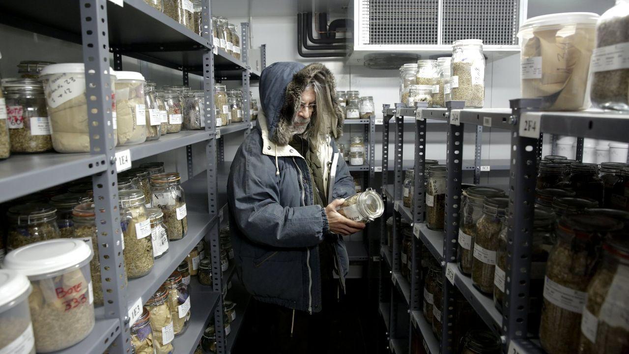 Imagen de archivo del banco de semillas donde se guardan las variedades de pimiento autóctonas
