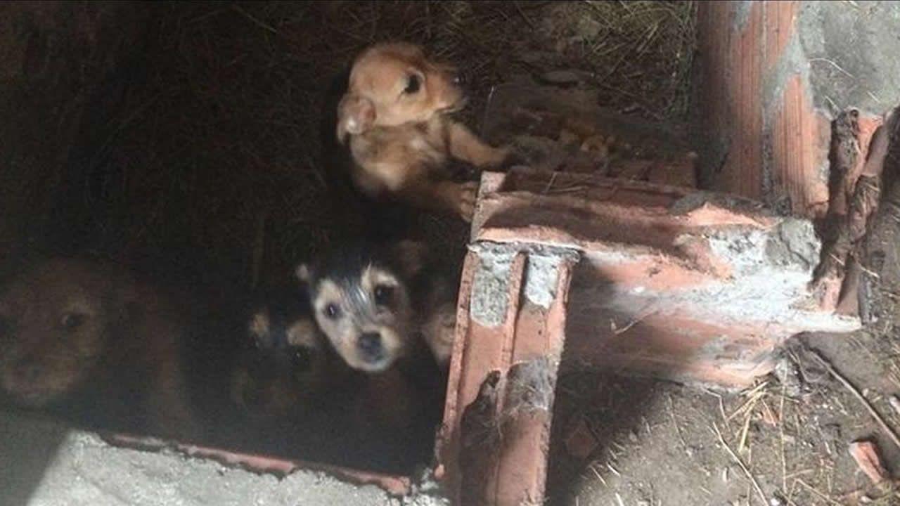 Maltrato animal en Negreira