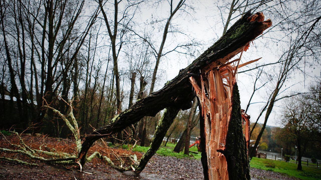 ASÍ HA CASTIGADO EL TEMPORAL A OURENSE.Árbol caído por el temporal en Barbantes.