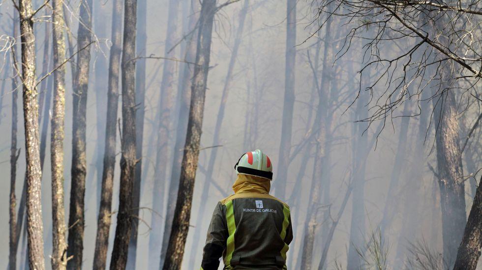 La mayor parte de la superficie quemada en A Ermida está plantada con pinos