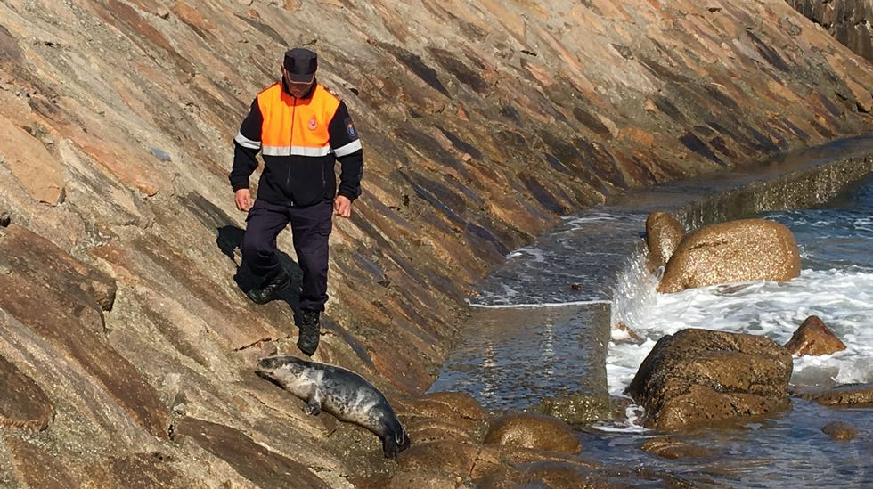 Ballena muerta en Redondela.El cetáceo se encuentra en avanzado estado de descomposición.