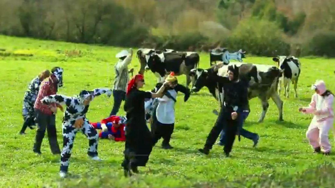 El «Harlem Shake», entre vacas