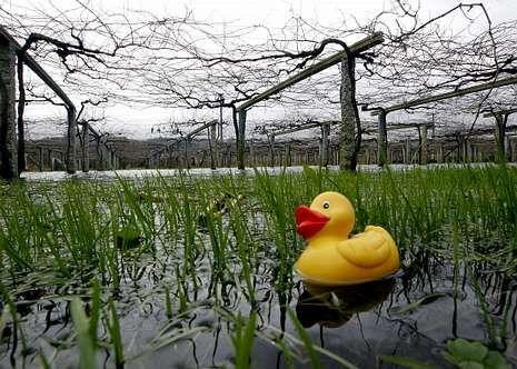 Las precipitaciones anegan campos y echan a perder cosechas futuras.