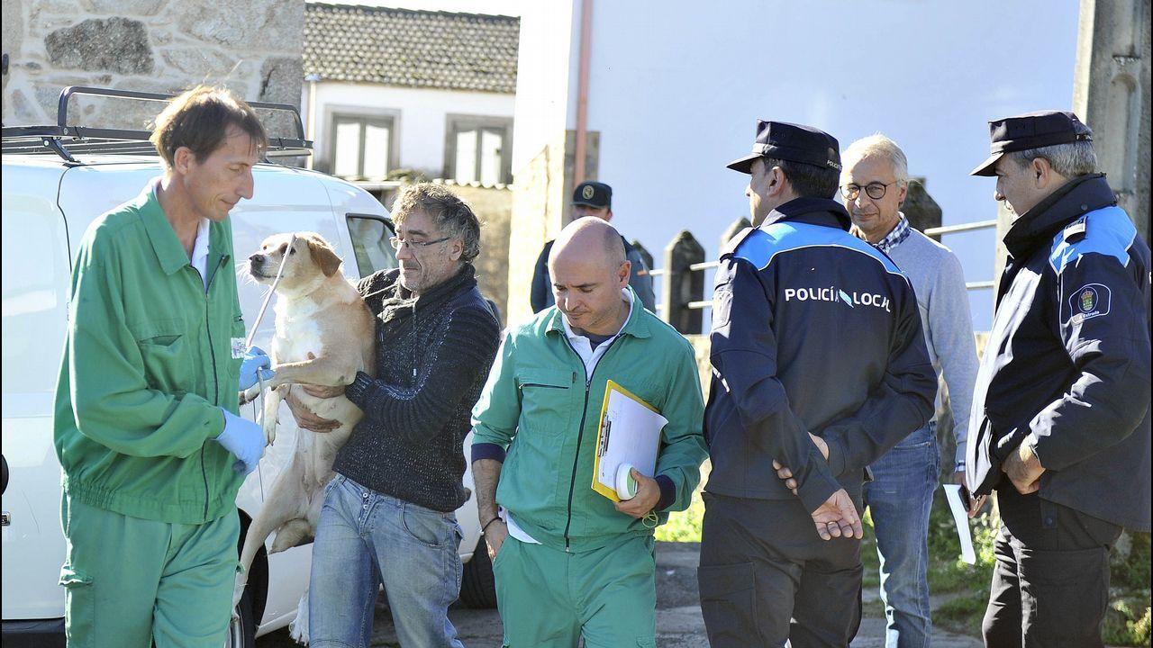 El Seprona pone en libertad a un zorro que rescató en la Pousada de Ribadumia.El municipio leonés de Burón se encuentra cerca de los límites de Asturias y Cantabria, en la cordillera
