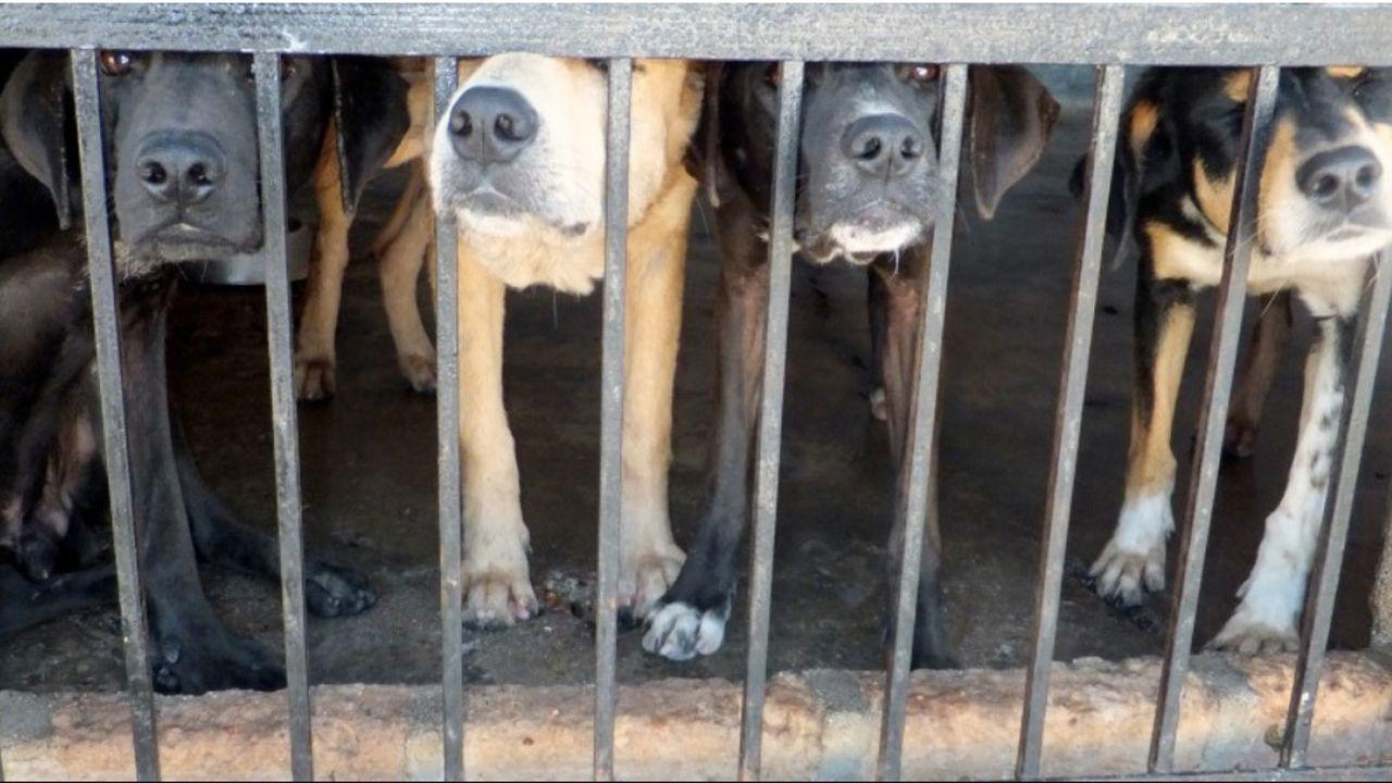 Perros enjaulados.Perros enjaulados, en una imagen de archivo