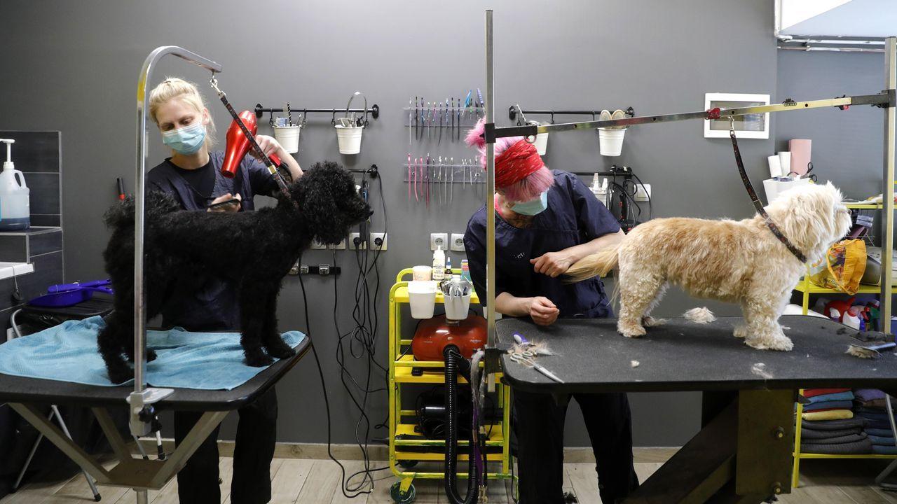 Peluqueros caninos cortan el pelo a dos perros en Zagreb, Croacia, ataviados con mascarillas