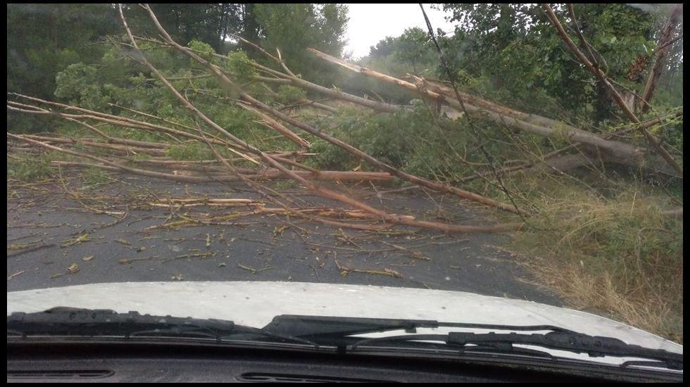 Una de las carreteras que permanecieron cortadas por la caída de árboles sobre la calzada