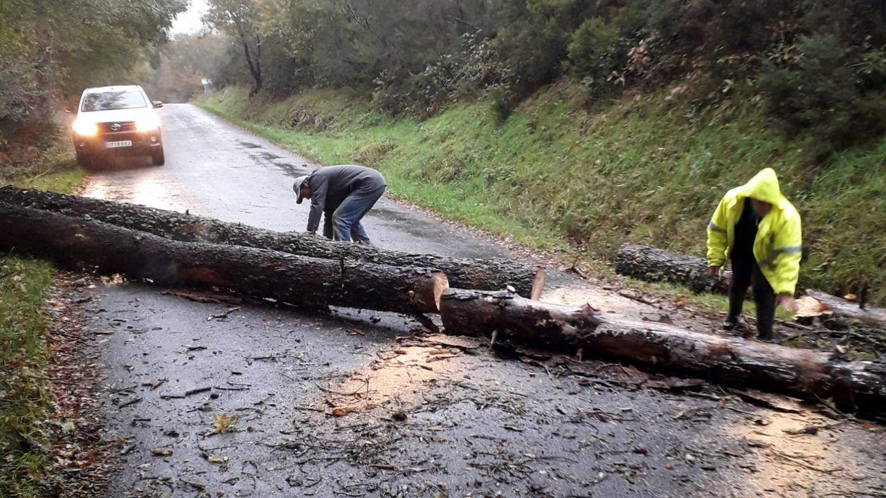 La montaña de Lugo se tiñe de blanco.Dos pinos derribados por el viento cortaron esta tarde el tráfico en la carretera de A Barrela a Os Peares, en el municipio de Carballedo
