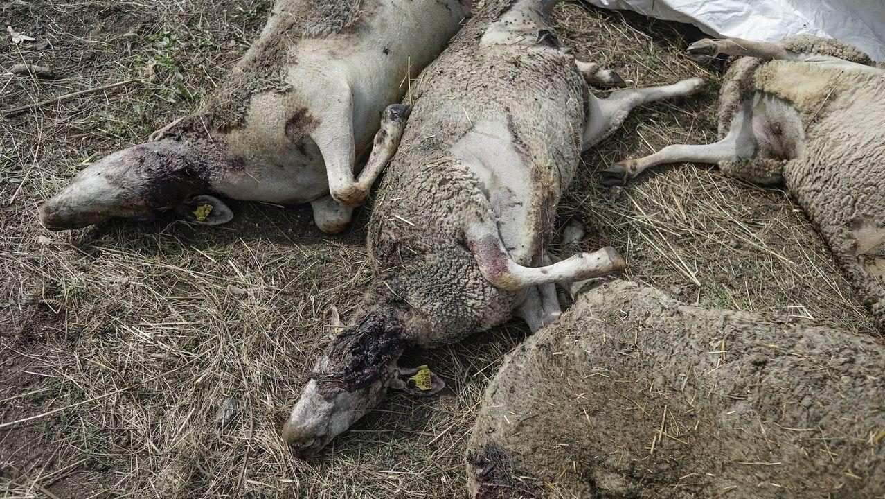El pasado fin de semana, varios ganaderos denunciaron la pérdida de sus reses.