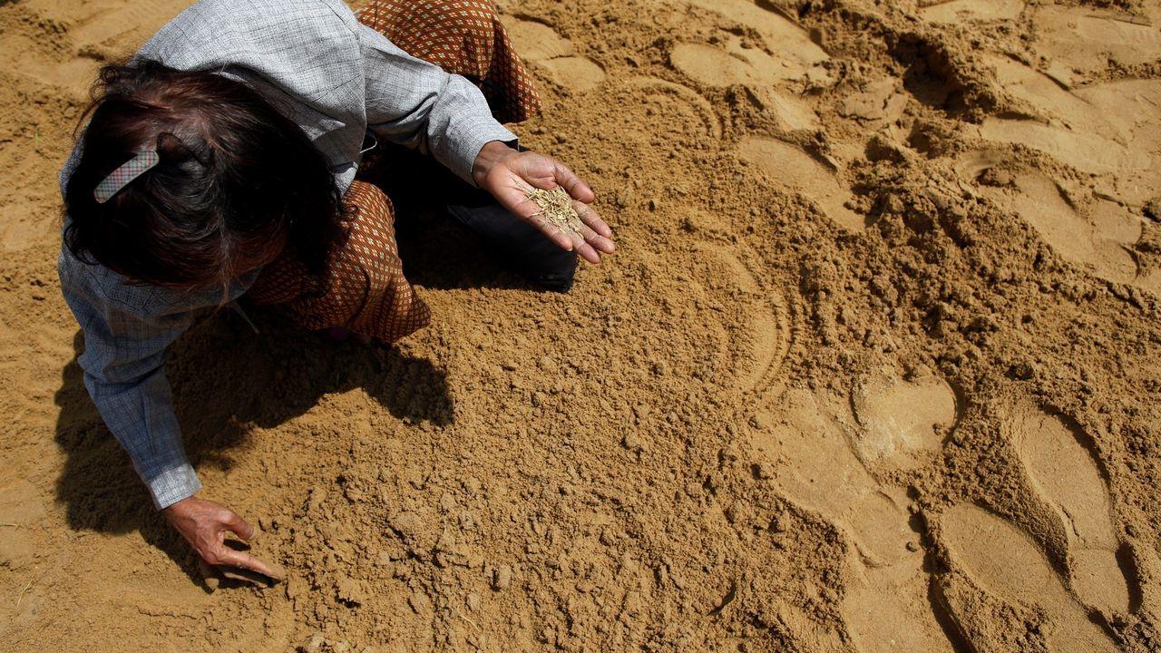 Agricultores recogen semillas de arroz para que les den suerte, salud y cosechas abundantes durante la Ceremonia Real del Arado en Sanam Luang en Bangkok (Tailandia)