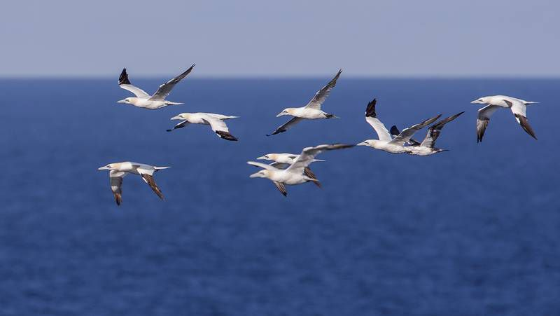 Participaron en las jornadas más de sesenta observadores de aves procedentes de todo el país