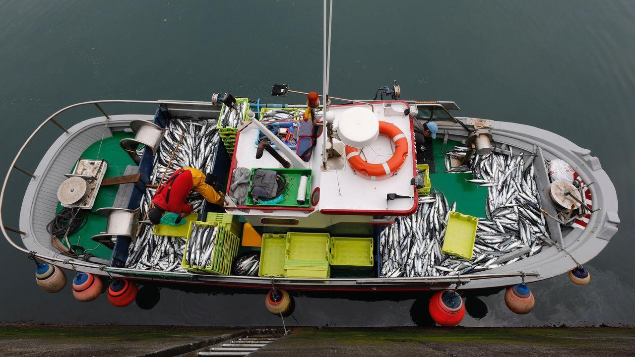 O Roncudo entregó su tesoro: las imágenes del primer día de percebe.Un ejemplo de un pesquero a pequeña escala, la lancha Ana Belén, descargando xarda el pasado mayo en Burela