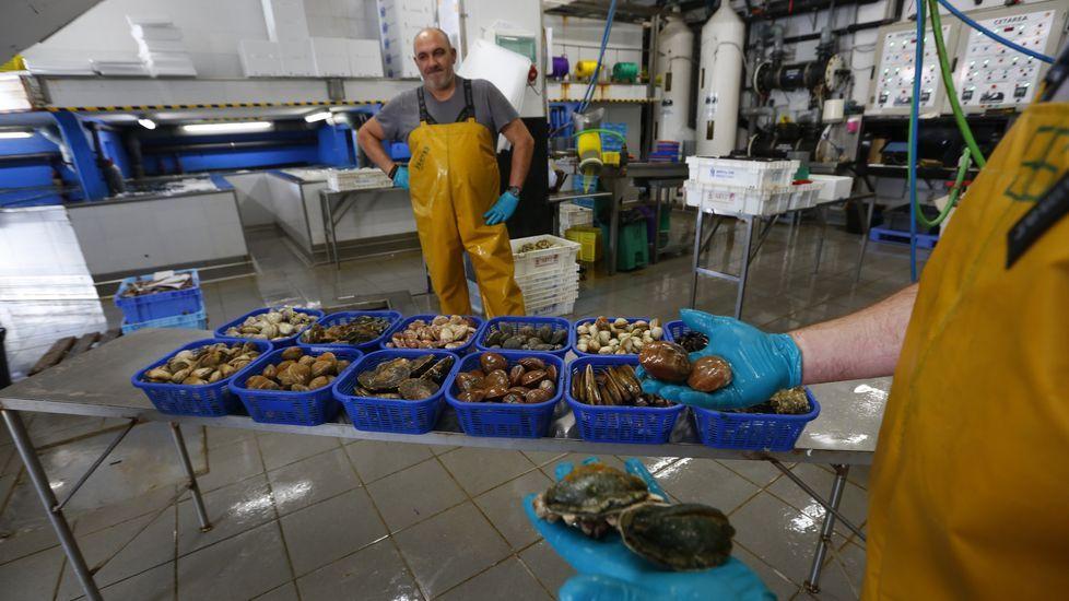 Nueva tienda de animales en Boiro, Alpebezoo.Kershaw considera que el «brexit» es el mayor daño autoinfligido por un país desde la Segunda Guerra Mundial