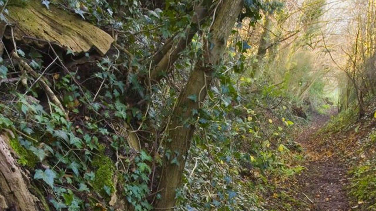 75 años del Día D.Unha corredoira preto de onde medrou Mcfarlane