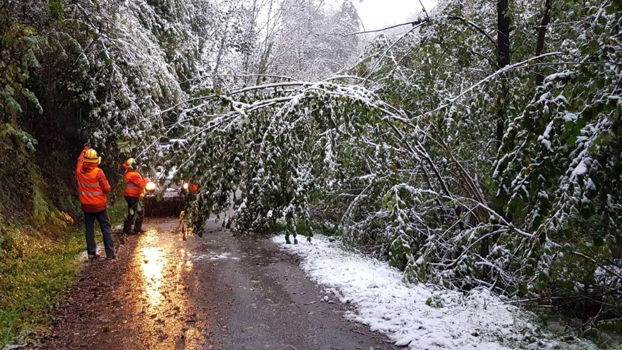 Los voluntarios de Pola de Lena ayudando a retirar los árboles caídos por la nevada