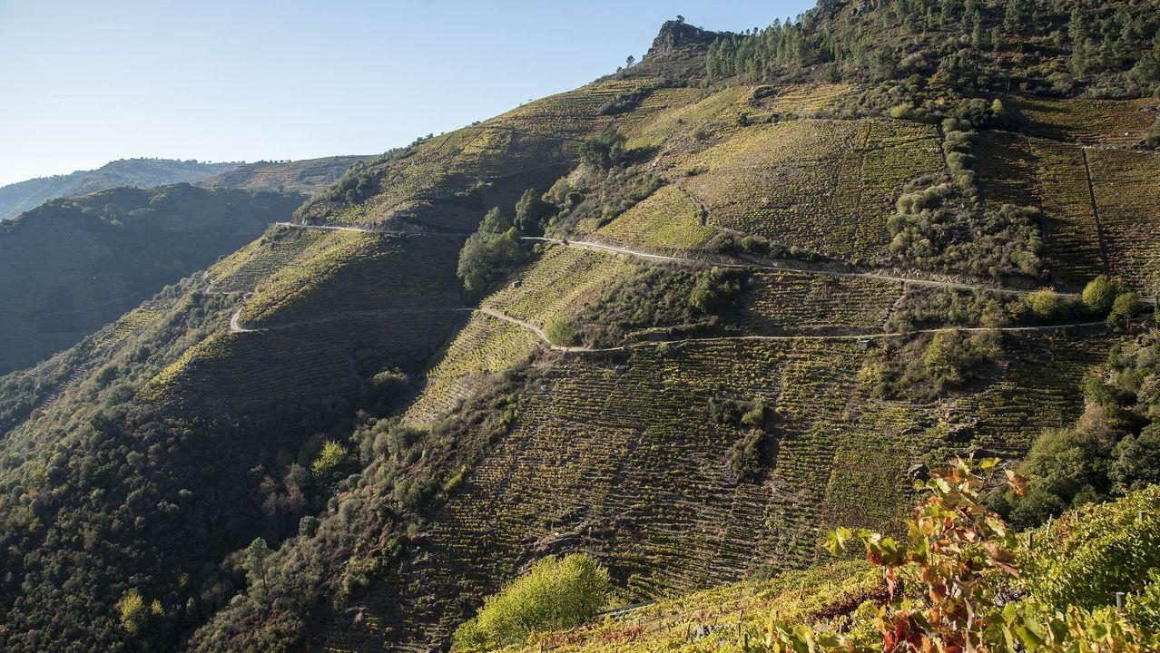 Viñedos sobre las laderas en las zonas conocidas como Meixemán y Seoane