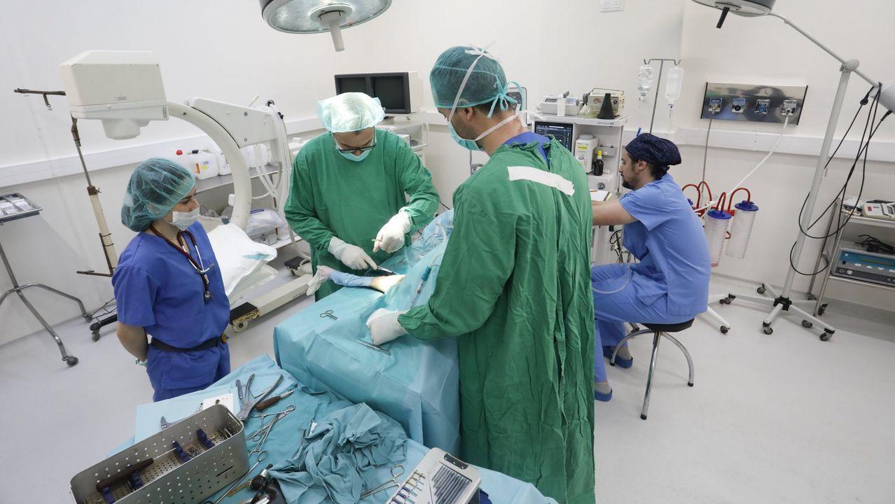 Estudiantes de la Facultad de Lugo haciendo prácticas en un hospital veterinario