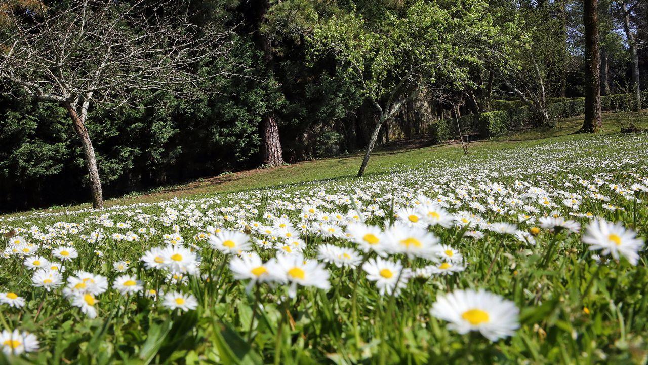 Un gigante atmosférico traerá aire africano a Galicia