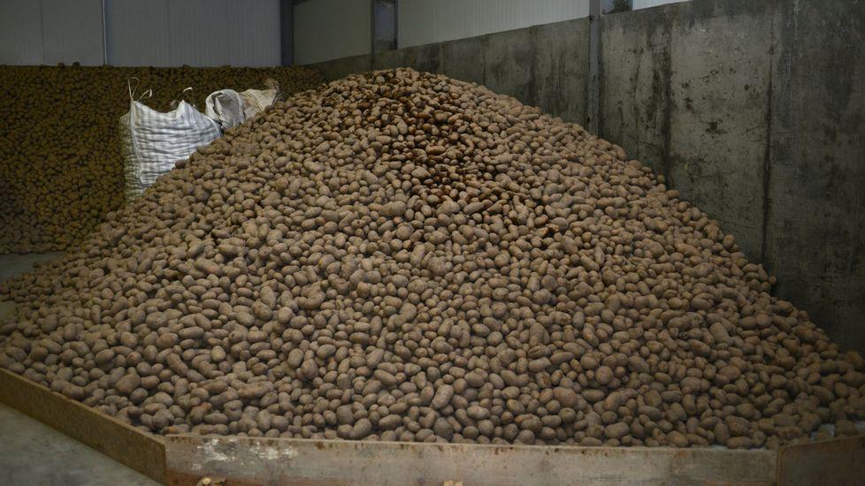 Homenaje en Xinzo.Todavía hay patata sin vender en los almacenes