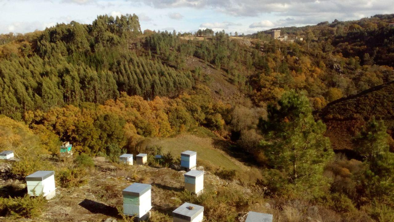 Las colmenas estaban en una zona de barranco, con el castillo de Pambre al fondo
