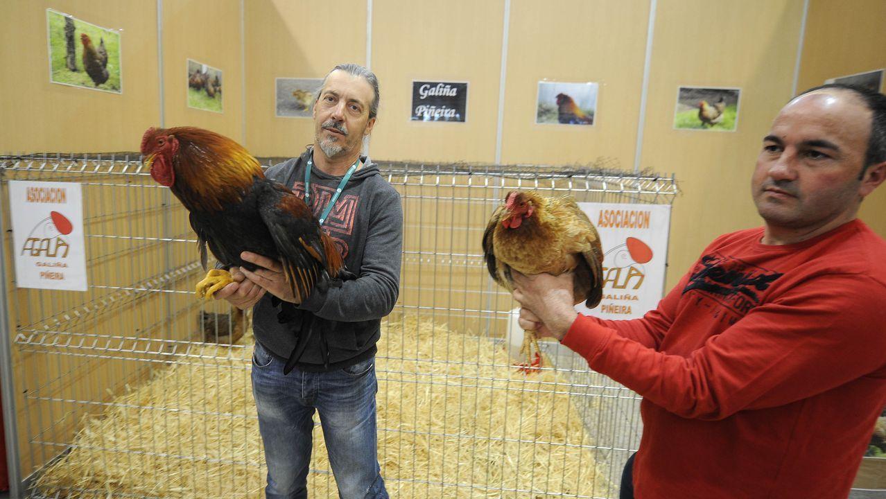 Dos de los criadores de Agalpi sostienen un gallo y una gallina piñeira