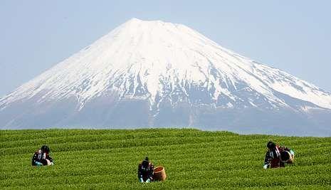 El monte Fuji, situado a cien kilómetros al sur de Tokio, es una referencia en el país. <span lang= es-es >EVERETT KENNEDY BROWN</span>