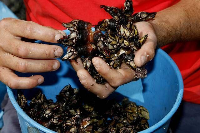 Conflicto entre las mariscadoras de Vilaboa y de Arcade por un banco marisquero.Basilio Otero, presidente da Federación Nacional de Cofradías de Pescadores de España, nunha imaxe de arquivo