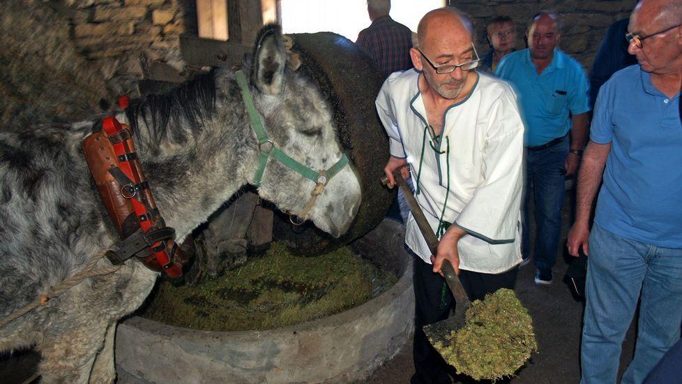 Demostración de molienda de aceituna al estilo tradicional en el molino artesanal de Bendilló, accionado por un burro