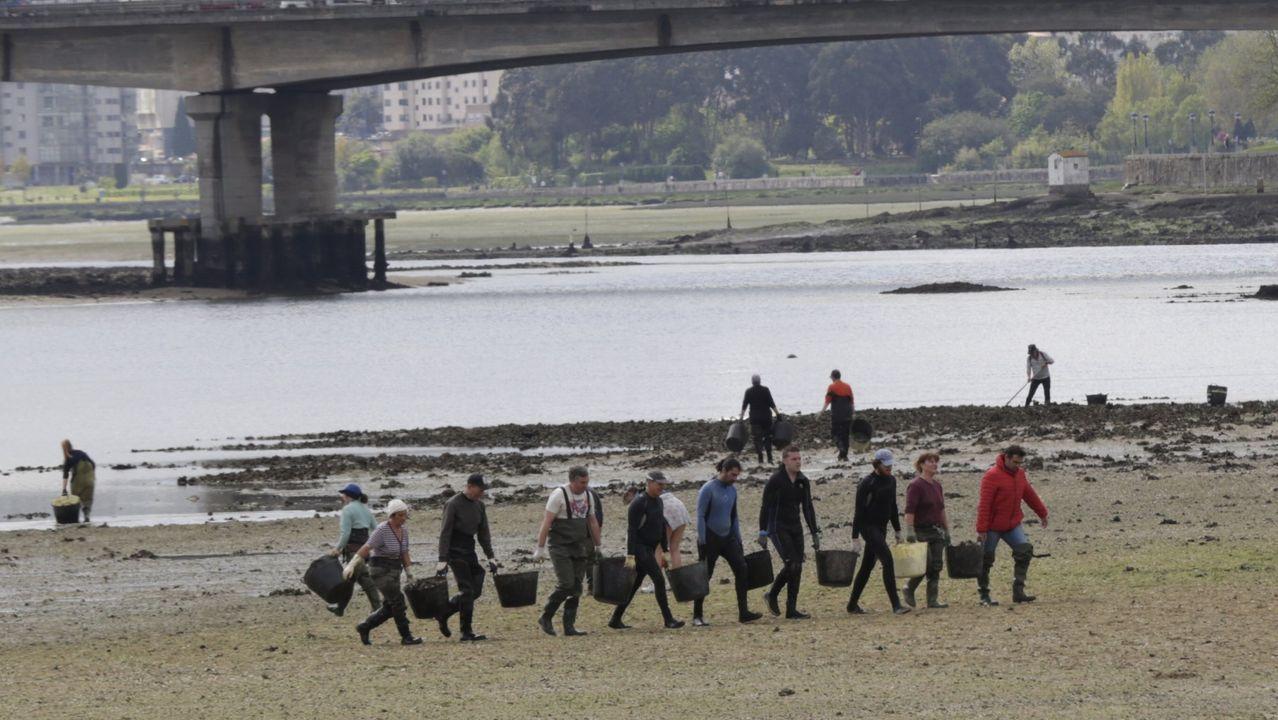 Los mariscadores, que siempre han demandado la regeneración, durante una campaña de eliminación de mejillón salvaje de la ría