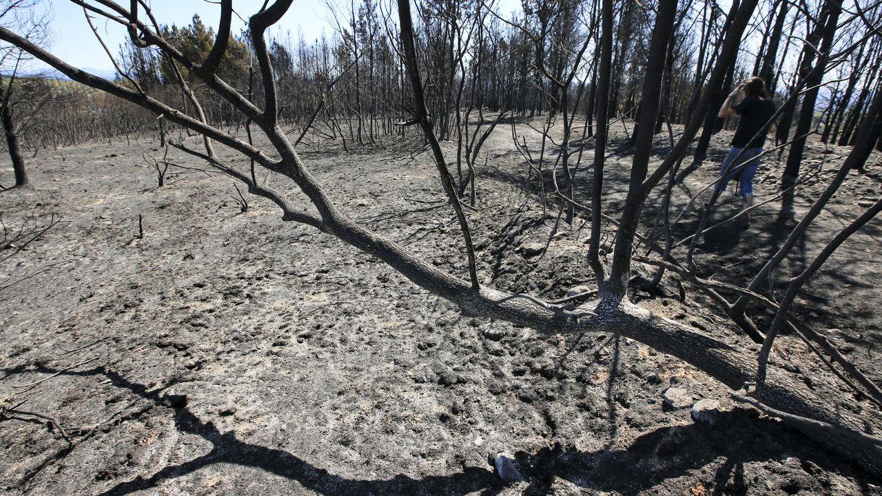 430 hectáreas se han quemado en Monforte y Pantón