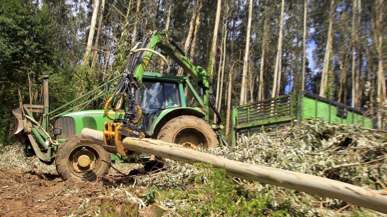 Bosque de eucaliptos en el entorno de Pontevedra