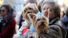 Perros y gatos dejarán de ser considerados «cosas» en España